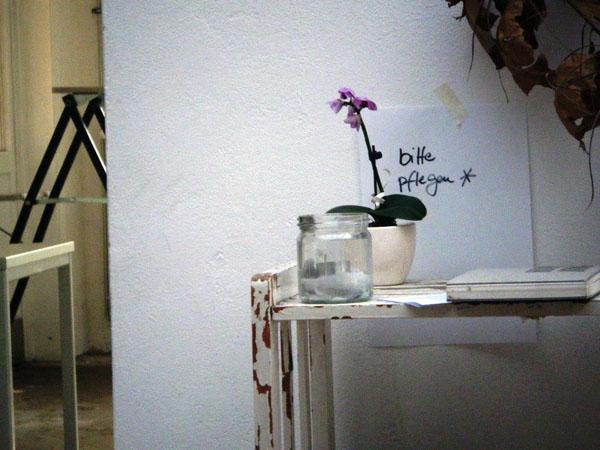 Monika Alovjanovic_2012_orchid_web